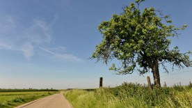 gallery33-awesome_lonely_trees-21
