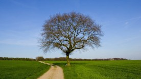 gallery33-awesome_lonely_trees-23