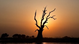 gallery33-awesome_lonely_trees-24