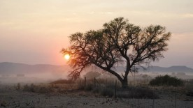 gallery33-awesome_lonely_trees-27