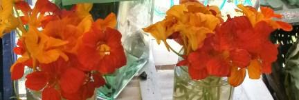 orange nasturtiums