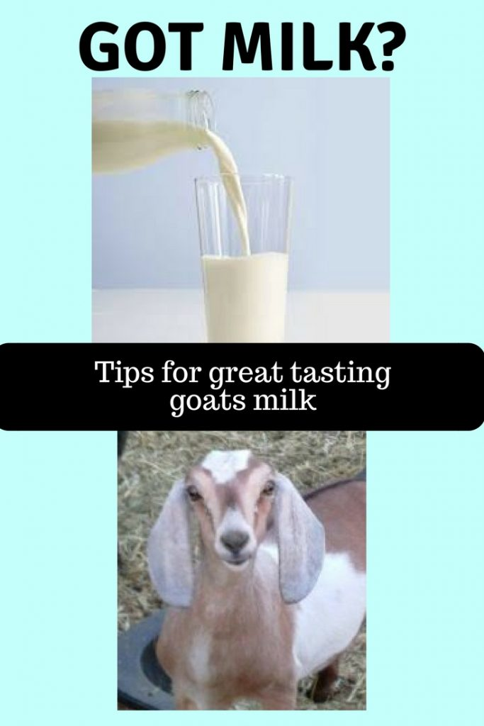 Great tasting goats milk
