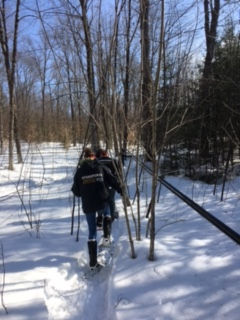 Several people are snowshoeing away, along a main maple sugaring tap line.