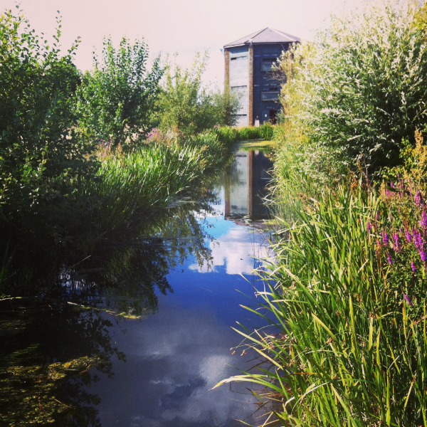 Barnes Wetland Centre London