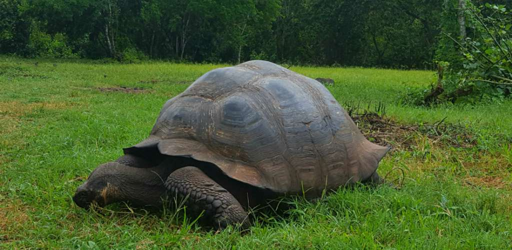 El Chato Tortoise Reserve on the Galapagos Islands