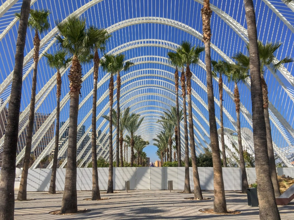 Palm tree garden in Valencia
