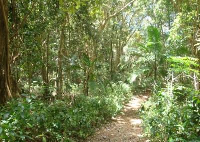 Walk Joe's River Forest