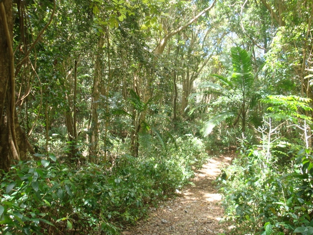 short walk in a Barbados Forest