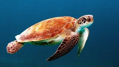 turtle360(640x400)