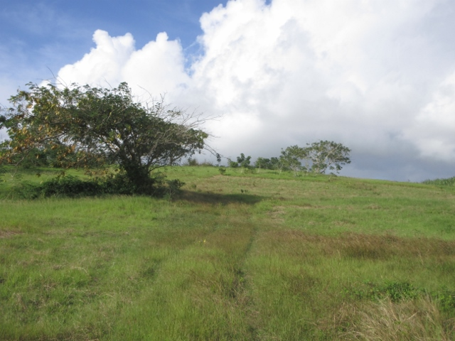 Barbados slave burial ground