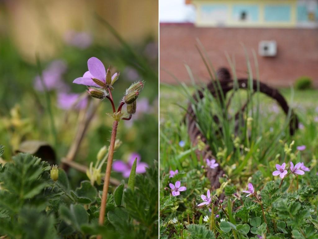 floare primavara close-up