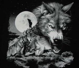 wolfpackbkc0