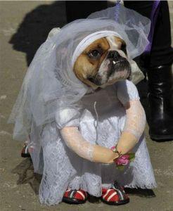 dog-bride