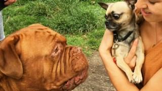 borrow my doggy