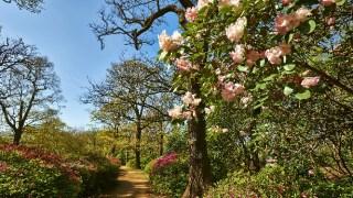 london-open-gardens