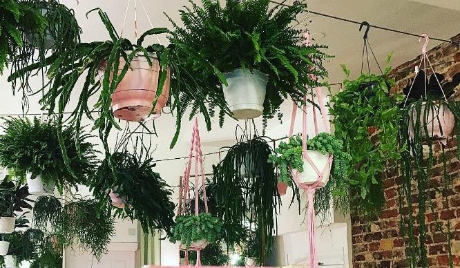 places-london-plants-greenery-foliage-restaurants-coffee-shops