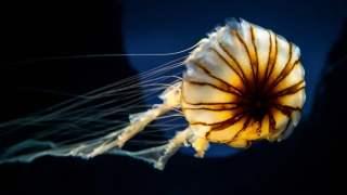 jellyfish-aquarium