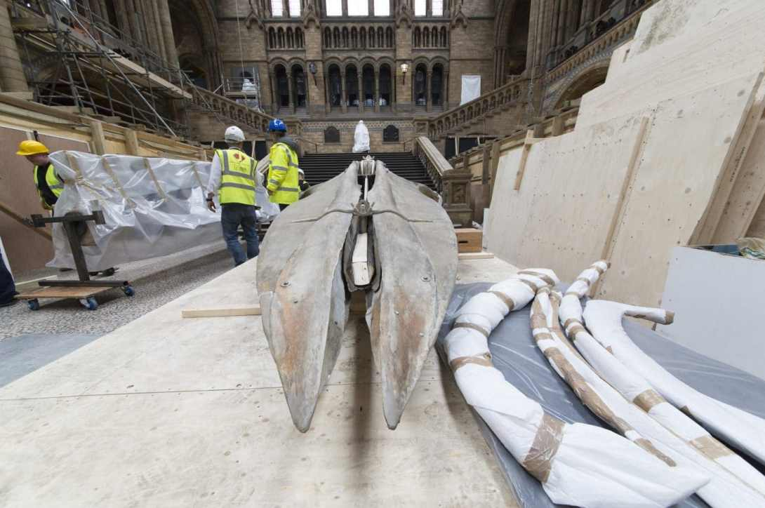 Hintze Hall developments 2017 Whale delivery