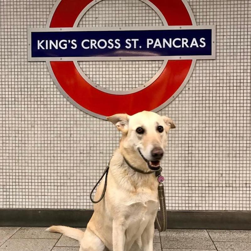 dogs on the tube instagram