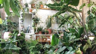 conservatory-archives-london-hackney-plants