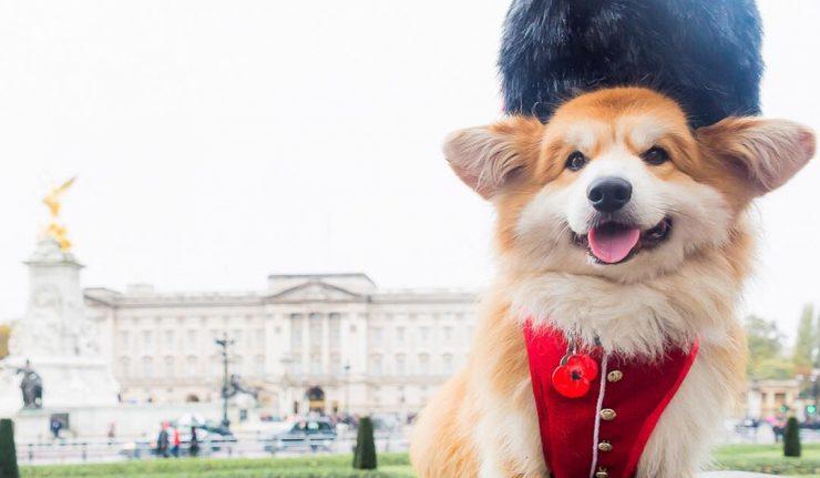 london-dogs-follow-instagram