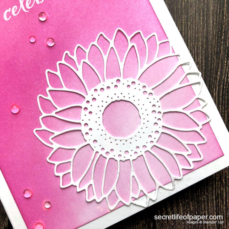 Pink White Celebrate Sunflower 1:1