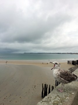 Seagull - Weekend in Saint-Malo