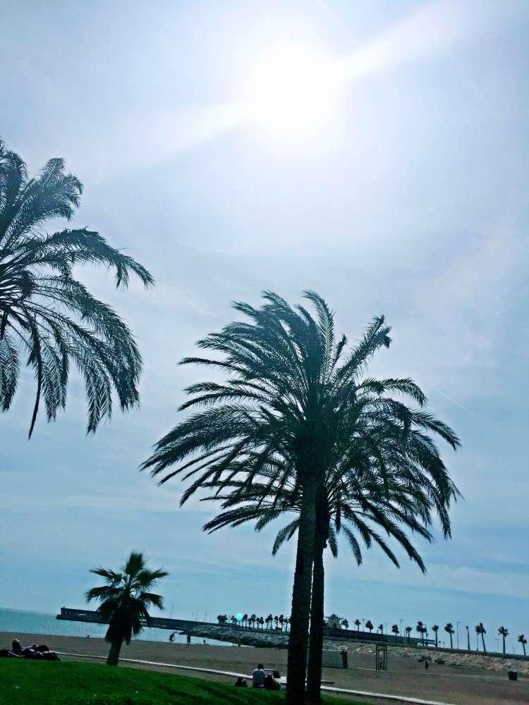 Palm trees, Malaga beach