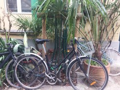 Black bikes near potted plants - self-guided tour of Belleville and Ménilmontant