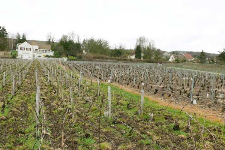 Vineyards of the Champagne region - Reasons to love France