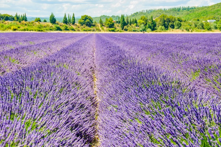 Lavender field - Reasons to love France