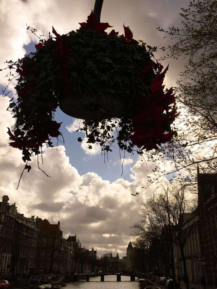 Flower pot - Amsterdam photo diary
