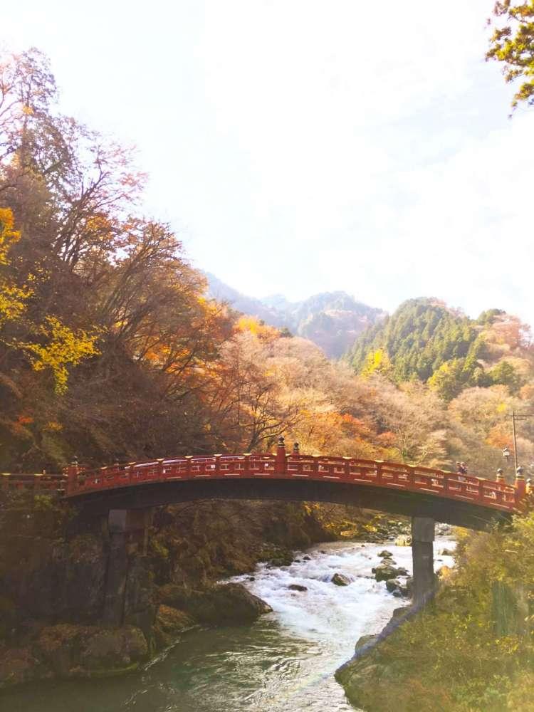 Shinjuku Gyoen garden : Head to Nikko