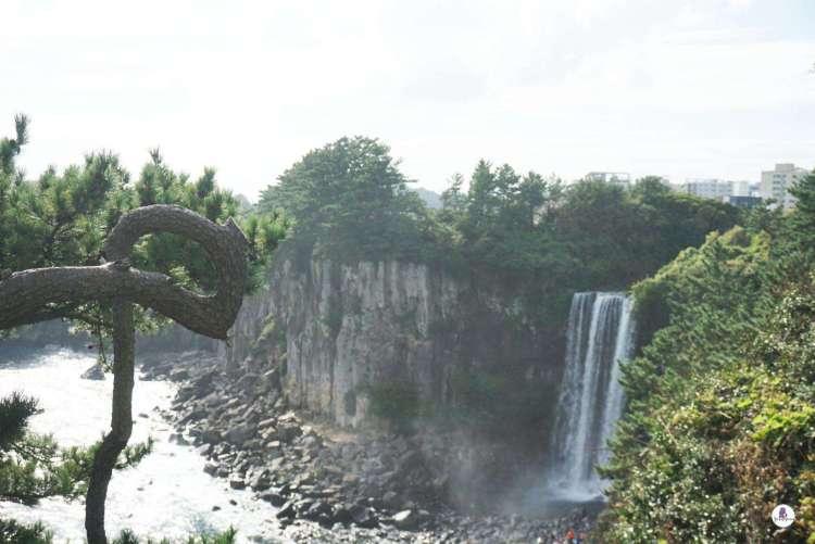 Majestic Jeongbang Waterfall in Seogwipo - Jeju Olle Trails