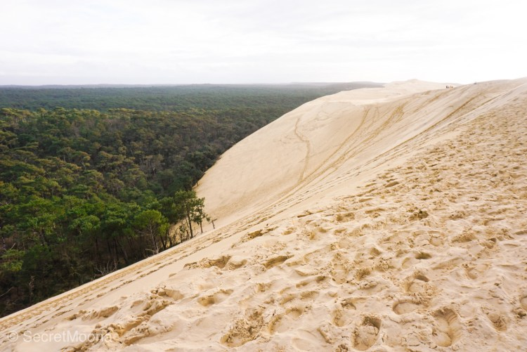 Lush green forest opposite pale sand dune