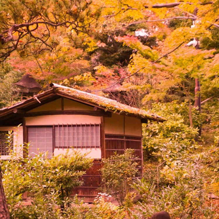 Teahouse surrounded by autumn leaves at Nezu Museum Garden