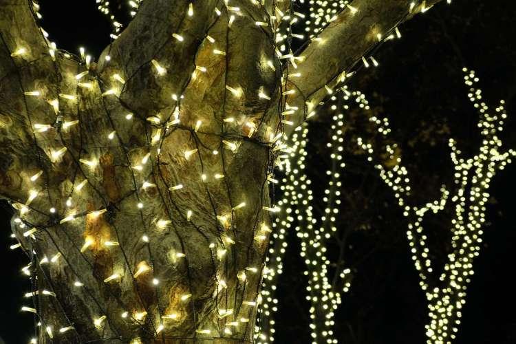Beautiful illumination of tree with gold lights