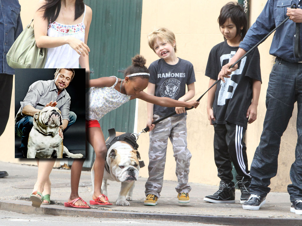 brad-pitt-bulledog-dog-jacques-secretnews-1 SecretNews