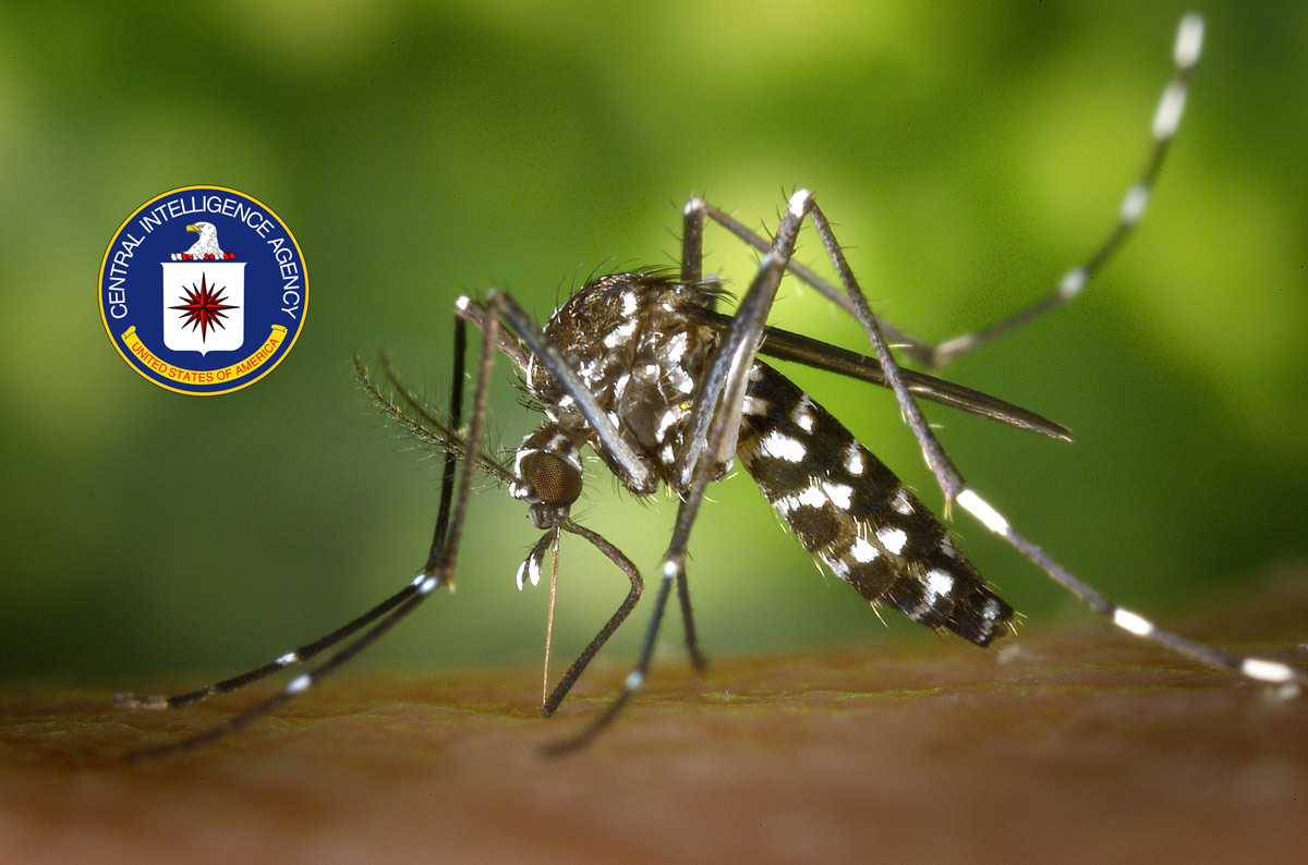 tigre-moustique-cia-pique-visage-peau-secretnews SecretNews