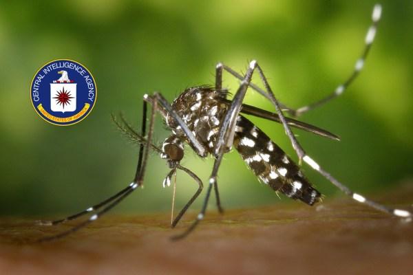 Pourquoi les moustiques ne piquent-ils jamais au visage ? Merci la CIA …