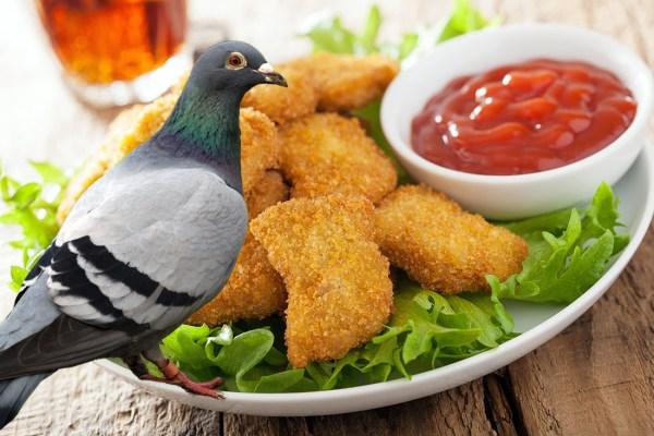 Scandale : De la viande de PIGEON dans + de 76% des nuggets vendus en Europe