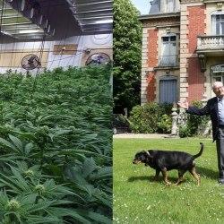 2.559 plants de cannabis découverts par EDF au manoir de Jean-Marie Le Pen (Montretout). Le FN est-il financé par l'argent de la drogue ?
