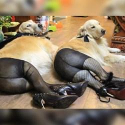 Danemark : ouverture de la première maison close zoophile d'Europe - Des chiens livrés à la prostitution