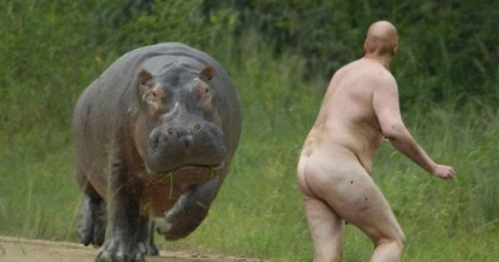 hipporida-corrida-hippopotame-nu-chili-1024x538 Chili : un mort lors d'une Hipporrida, cette sorte de corrida qui se pratique avec des hippopotames