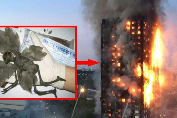 Exobioterrorisme : d'étranges créatures découvertes dans les décombres de la tour incendiée à Londres