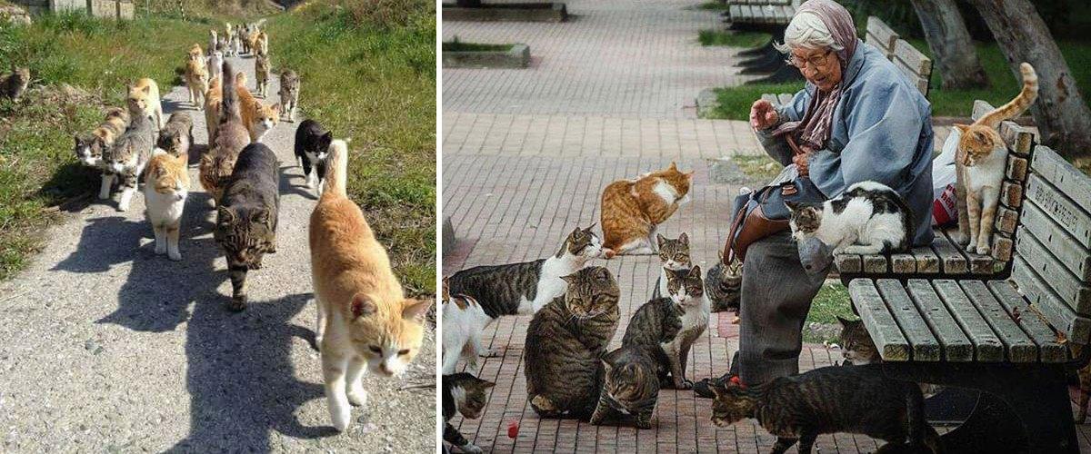 Jugée pour avoir aidé des dizaines de chats migrants, Célestine Durant  a été relaxée