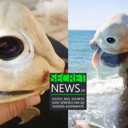 Encore un étrange requin-cyborg muni d'une caméra-espion pêché au Sri-Lanka