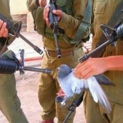 Israël : un pigeon-voyageur palestinien condamné à mort pour tentative d'espionnage