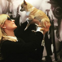 Transgenre canin : Peter Pan le chien de Paris Hilton va suivre un traitement hormonal pour devenir une femelle