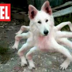 Marvel : Spider-Dog accompagnera Spider-Man dans ses prochaines aventures